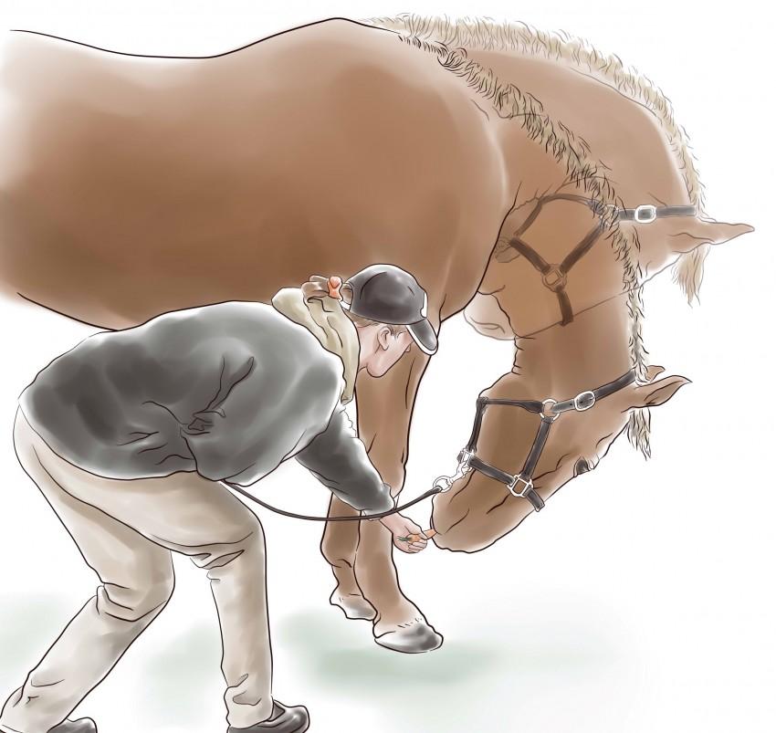 Fortalecimiento del dorso en animales