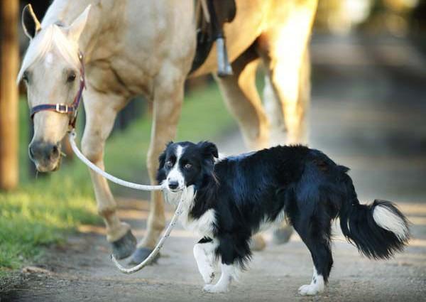 ejercicio_caballo_perro